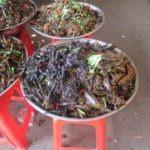 insectes pour le diner
